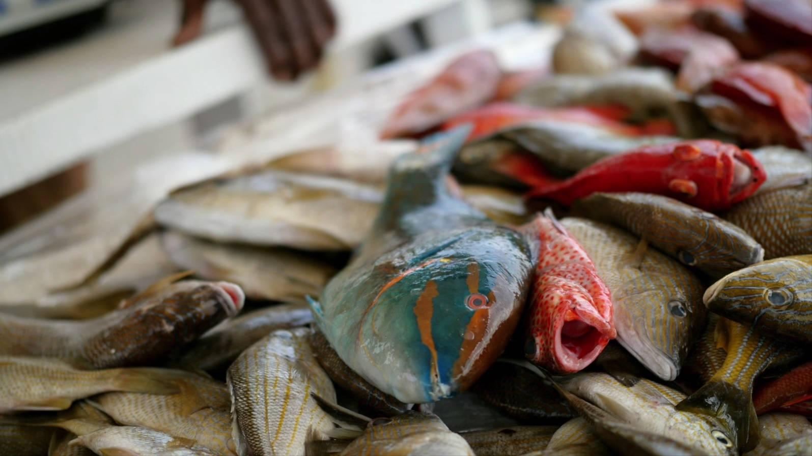 La pêche en Guadeloupe